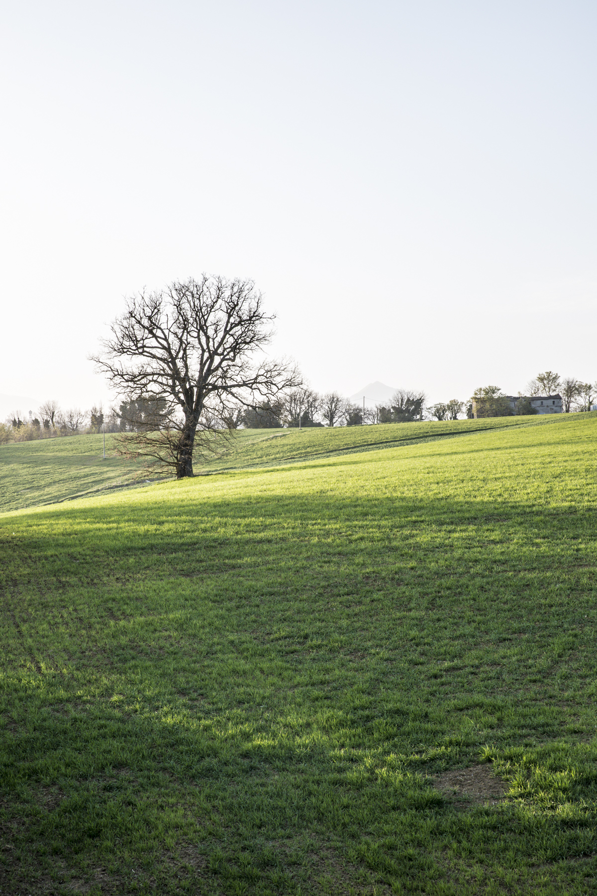 primavera Rossella Venezia
